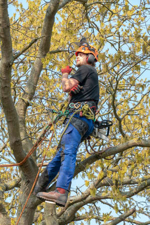 Arborist or Tree Surgeon resting up a tree using a safety harness. Imagens