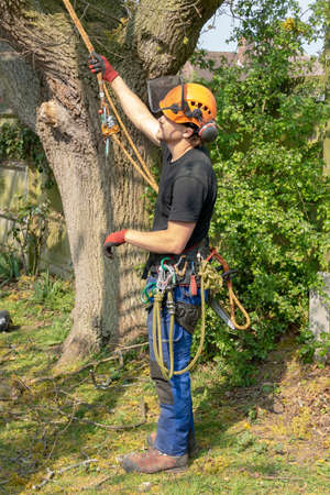Tree Surgeon or Arborist with safety harness and ropes ready to work up a tree.
