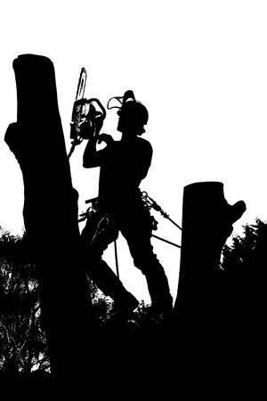 Silueta de vector de un arbolista en el trabajo con una motosierra en un árbol.