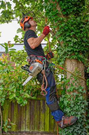 Arborist or Tree Surgeon with chainsaw and safety harness looking to tie his safety rope.