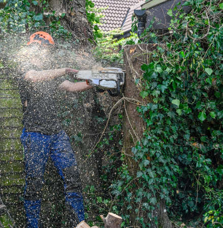 Tree Surgeon or Arborist cutting tree stump with a chainsaw. Motion blur of the sawdust