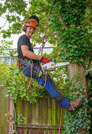 Smiling Arborist or Tree Surgeonwith a chainsaw using safety ropes up a tree.