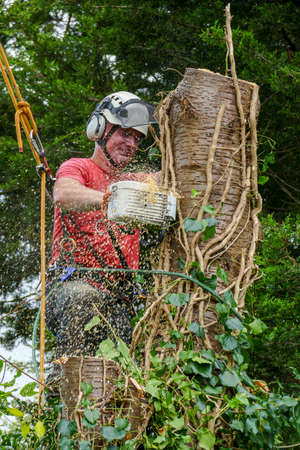 Sawdust falls from a chainsaw being used by a Tree Surgeon roped to a tree. The sawdust has motion blur.