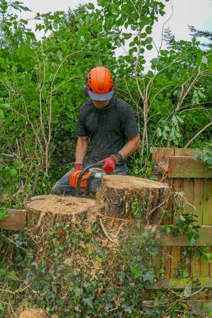 Arborist or Tree Surgeon wearing safety equipment using a chainsaw to cut a large tree stump. Stok Fotoğraf - 131710411
