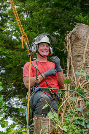 Tree Surgeon or Arborist using safety ropes while working up a tall tree