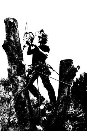 Black and White image of an Arborist or tree surgeon roped to a tree and using a chainsaw Stok Fotoğraf - 131710556