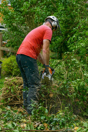 A Tree Surgeon or arborist wears safety equipment while clearing up a felled tree with a chainsaw.