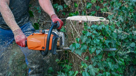 An Arborist or Tree Surgeon uses a chainsaw to cut a tree stump Stok Fotoğraf - 131710341