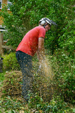 Wood chippings flying from a chainsaw while the Tree Surgeon cuts up a fallen tree.