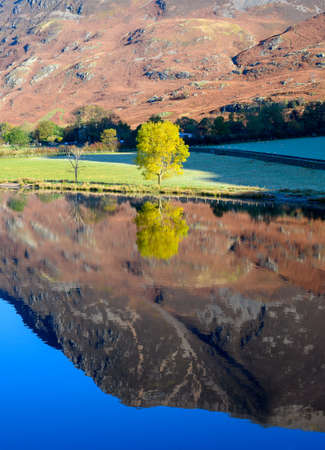 Yellow Tree reflection in Crummock Water in the lake District,Cumbria,UK Reklamní fotografie