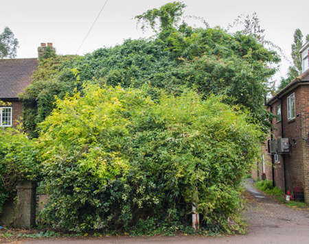 House covered and overgrown completely with trees and other plants