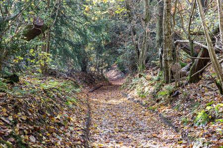Fallen autumn leaves cover a dirt track through a wood.