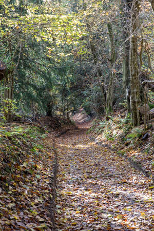 Dirt track through a wood is covered with fallen leaves Reklamní fotografie