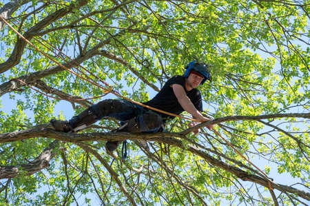 A Tree Surgeon or Arborist tying a rope to a branch ready for cutting.