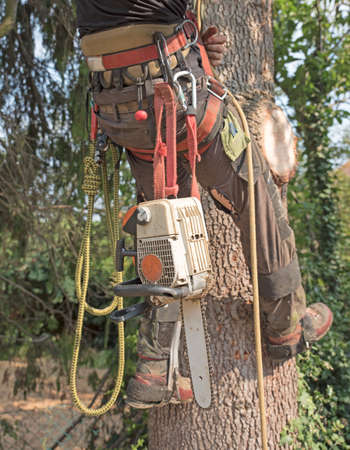 Arborist with his harness and tools ready to climb a tree Stock fotó