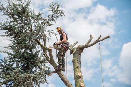 Arborist or Tree Surgeon working on top of a tree. Stock fotó