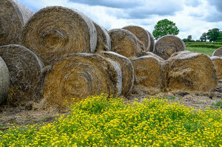Round bales of straw stacked in a farmers field.