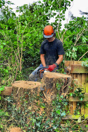 Tree Surgeon or Arborist cutting up a tree stump with a chainsaw.