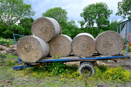 Round bales of straw stcked on a farmers trailer. Stock fotó