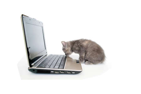 kitten play with notebook Stock Photo - 7107896