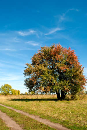 Big tree on green field with blue sky Stock Photo