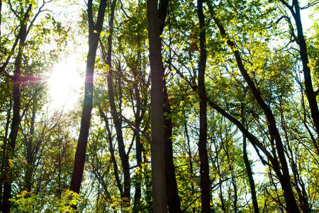 Forest Glade Stock Photo - 8058366