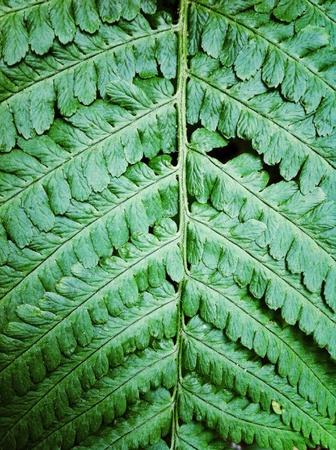 underbrush: Fern leaf Stock Photo