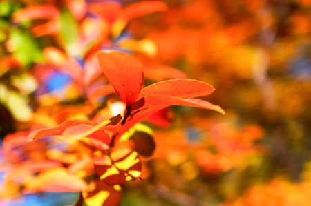 underbrush: autumn leaves close up