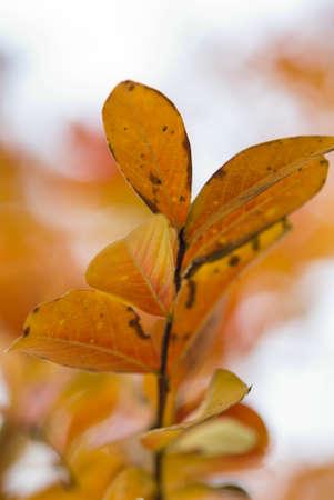 underbrush: autumn leaves, close up