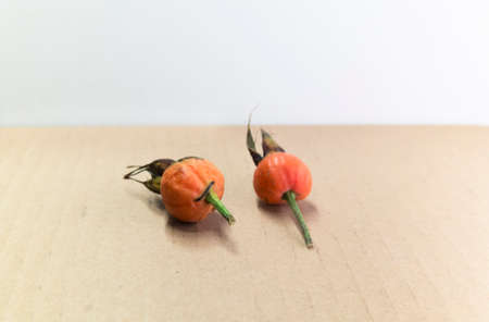 paperboard: two ripe rose hip on a ligh paperboard surface