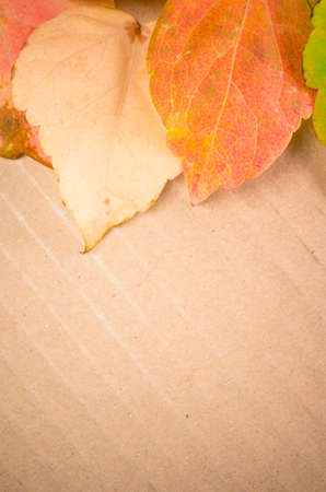 paperboard: yellow orange leaves on a recycled paperboard surface Stock Photo