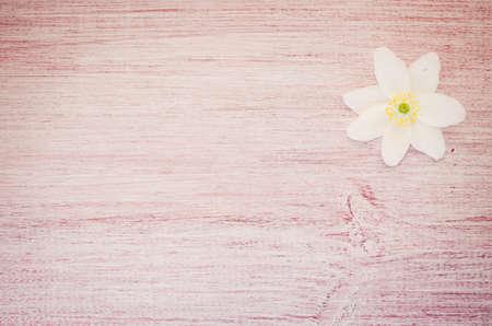 windflower: anemone nemorosa flower on a pastel tinted wood background Stock Photo