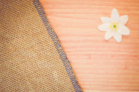 windflower: anemone nemorosa flower on a pastel tinted wood and burlap surface