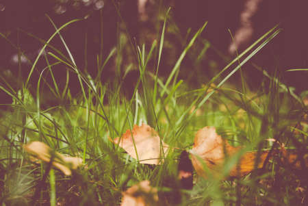 underbrush: wild green grass and yellow leaves close up - nature backgrounds and textures Stock Photo