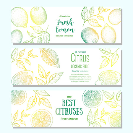 Citrus horizontal banner collection. Lemons hand drawn in ink illustration.