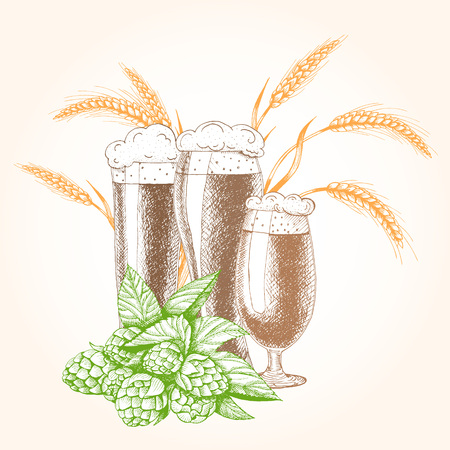 Vector illustration of beer. Raw material for brewing: branch of hops and barley. Pub menu. Beer set.