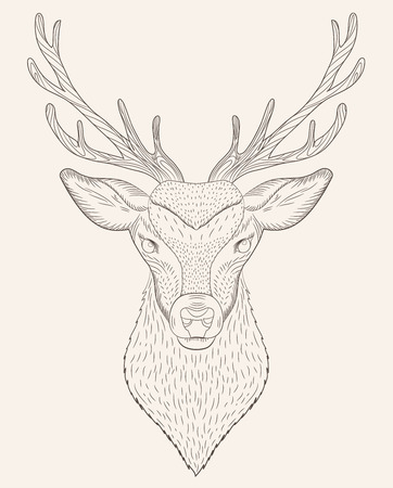Isolated sketch portrait of a deer illustration