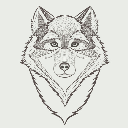 Sketch portrait of Wolf isolated