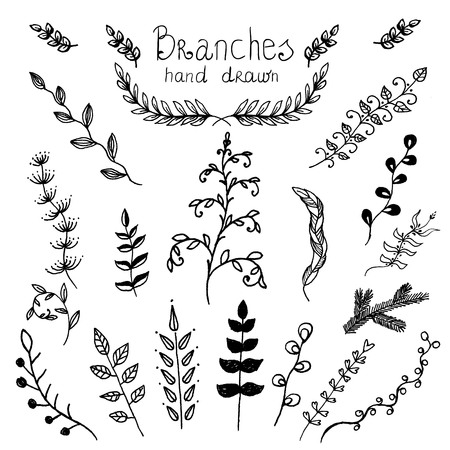 Set of beautiful branches drawn in ink.