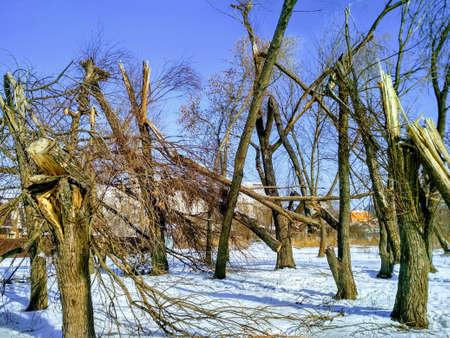 broken trees after a windbreak Stock Photo