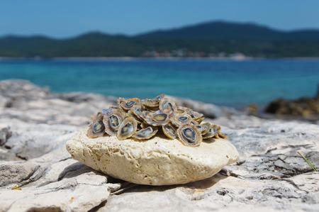 Adriatic sea limpets 写真素材