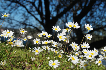 Flowers on the meadow, Dalmatia