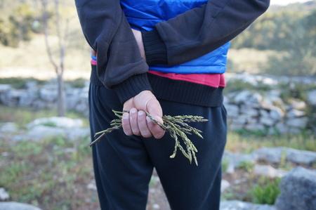 Wild asparagus in nature