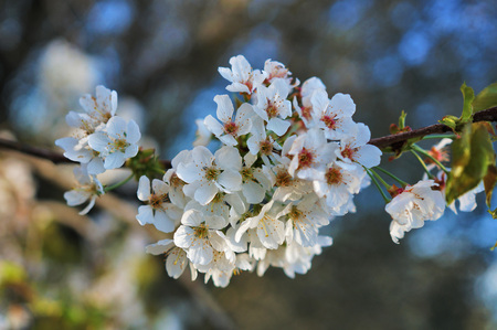 The branch in bloom