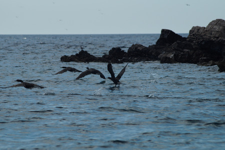 Birds in the Adriatic sea Stock Photo