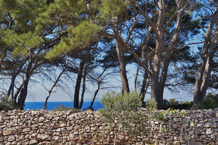 Forest on the Trestenik islet, Adriatic sea, Dalmatia Stock Photo