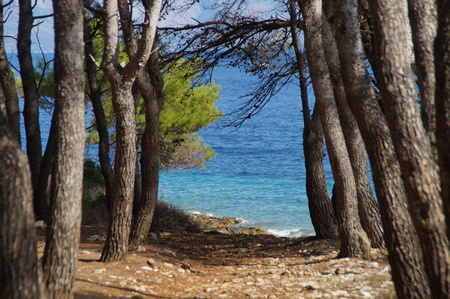 Forest on the Proizd islet, vela Luka, Korcula island, Croatia