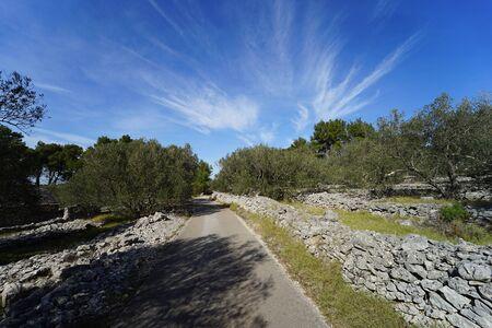 Dalmatian landscape with olive trees (Vela Luka, Korcula Island)