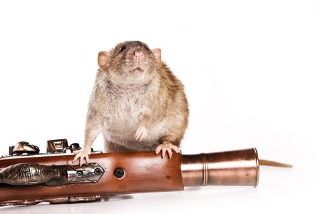 rovers: Rat on white background