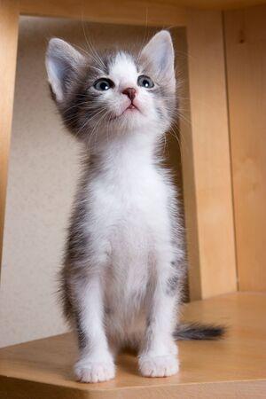 Little Kitten in house Stock Photo